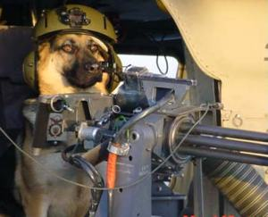 dog_and_gun